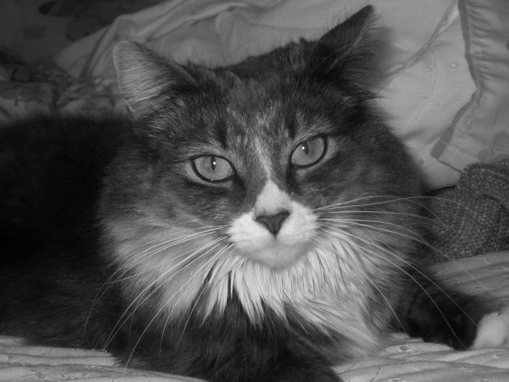 Cat Picture of Bota